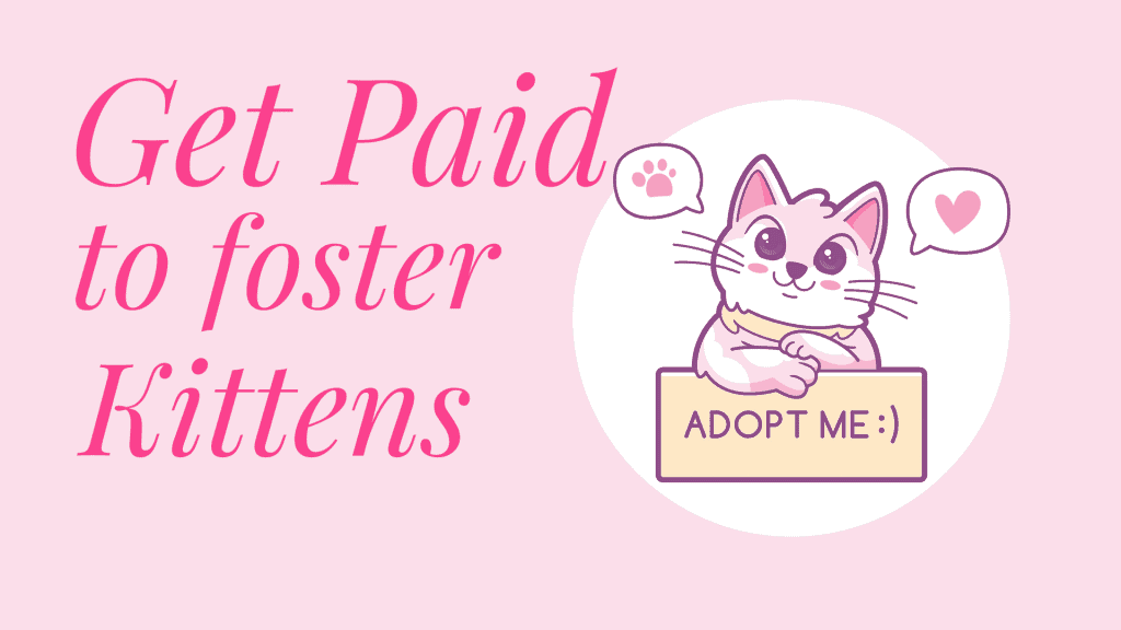 get paid to foster kittens