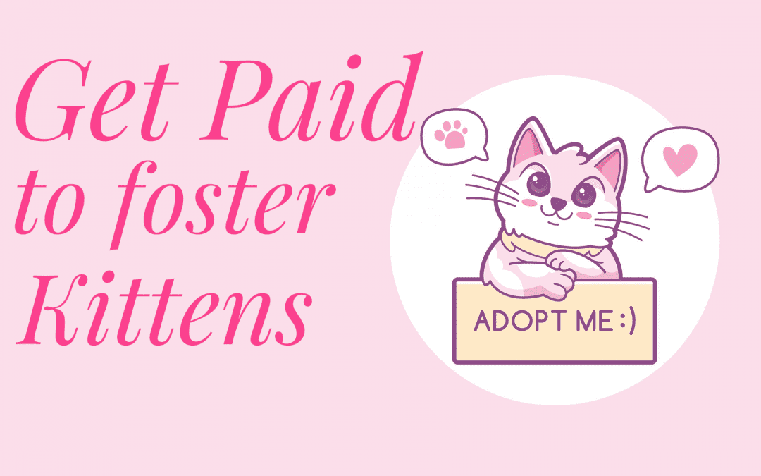 Get Paid to Foster Kittens ? Is it Possible